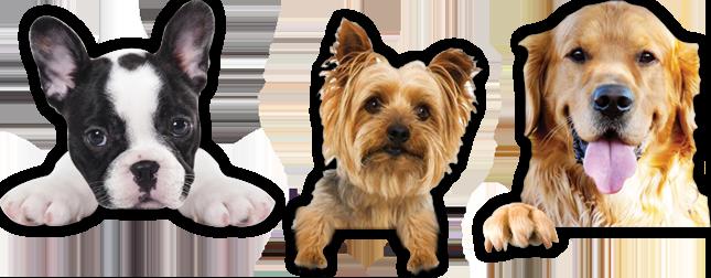 Dog Accessories Online