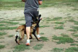 dog-trainer-consulting