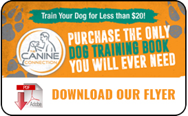 Dog trainer in Los Angeles