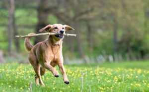 Dog Engaging Activities