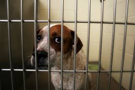 Dog from a Shelter or Rescue