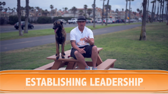 Are You the Head of the House? Establishing Leadership