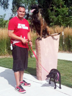 WODT has trained over 3,000 dogs with incredible transformations.