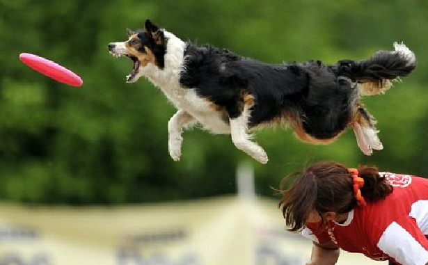 Fun Hobbies for Your Dog