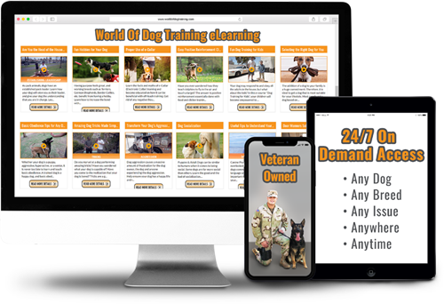 Dog training ECourse