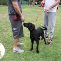 Virtual army dog training classes.